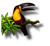 toucan-pallete-2frame.png