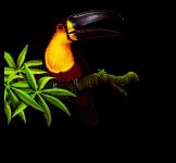 http://littlesvr.ca/apng/images/toucan-pallete-2frame.png